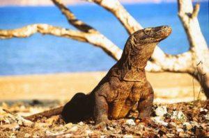 Inilah Alasan Kenapa Harus Traveling ke Pulau Flores